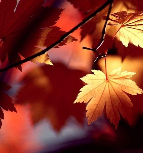 Νότες Φθινοπώρου